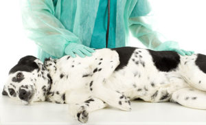 Pet Exams and Consultations - Pet Clinic - Washington, DC